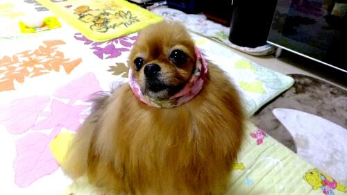 PhotoHenshu_20120604194641.jpg