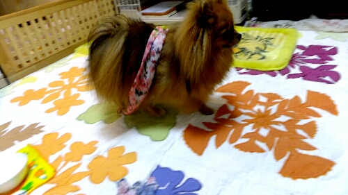 PhotoHenshu_20120604194723.jpg