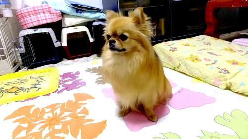 PhotoHenshu_20120604194812.jpg