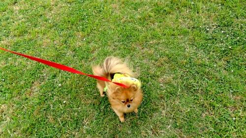 PhotoHenshu_20120606111950.jpg