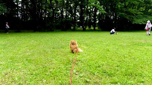 PhotoHenshu_20120606134051.jpg