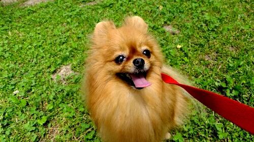PhotoHenshu_20120606134924.jpg