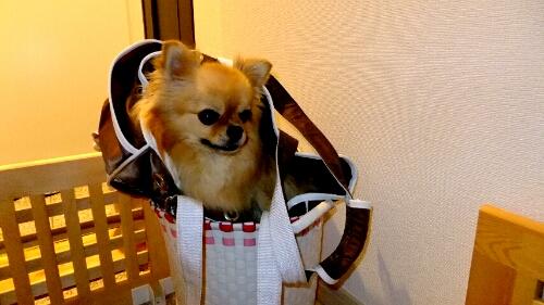 PhotoHenshu_20120606135250.jpg