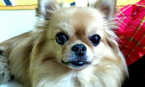 PhotoHenshu_20120915182442.jpg