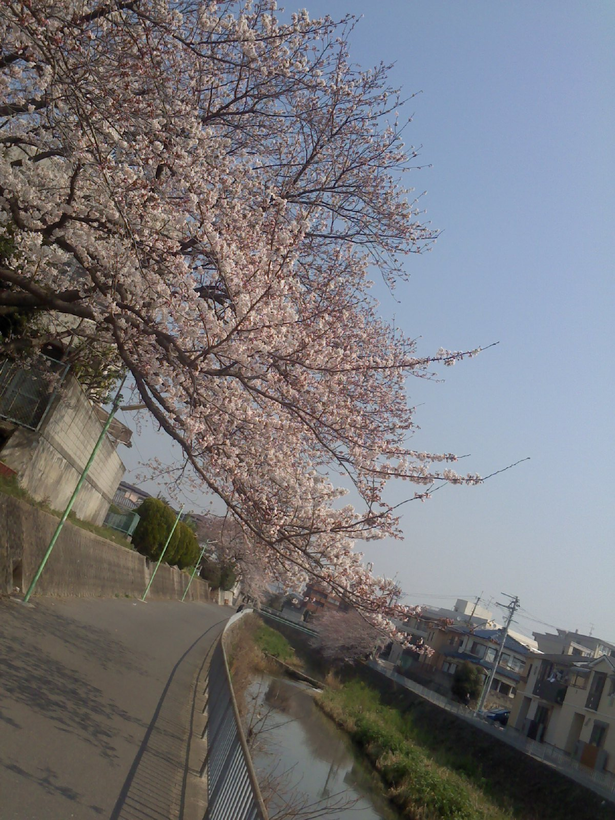 画像20120410 055