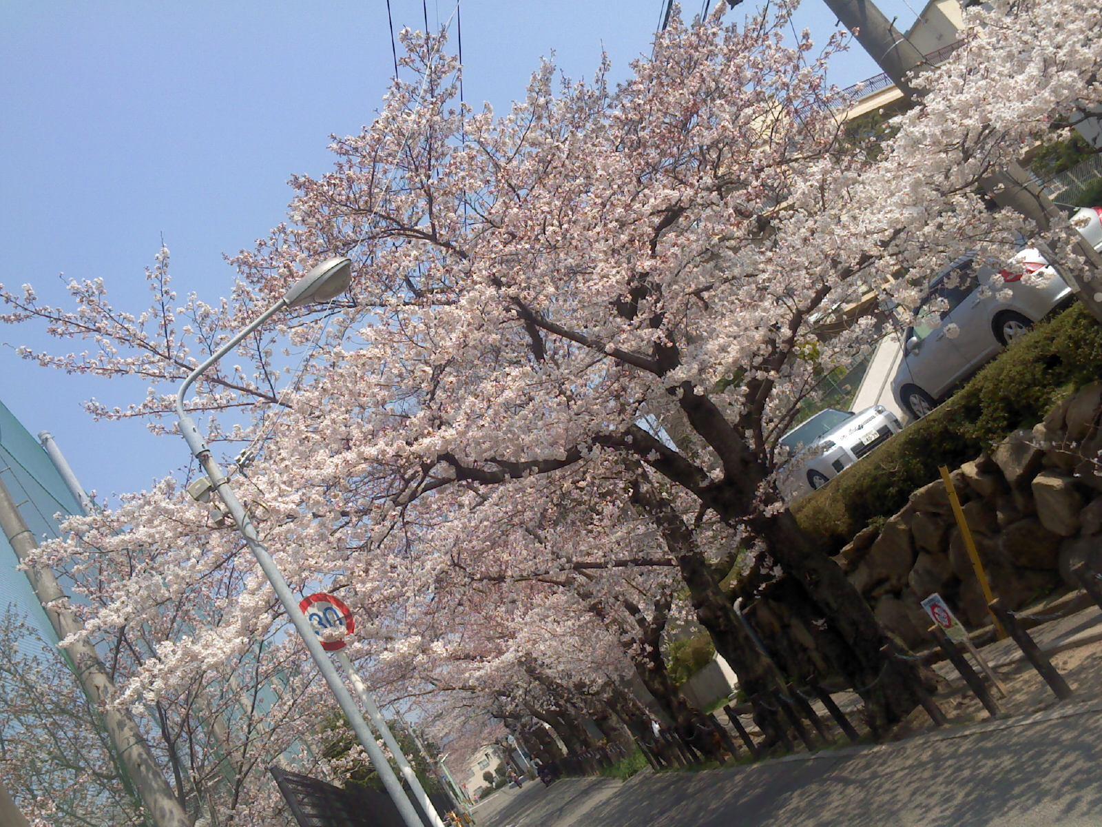 画像20120410 066