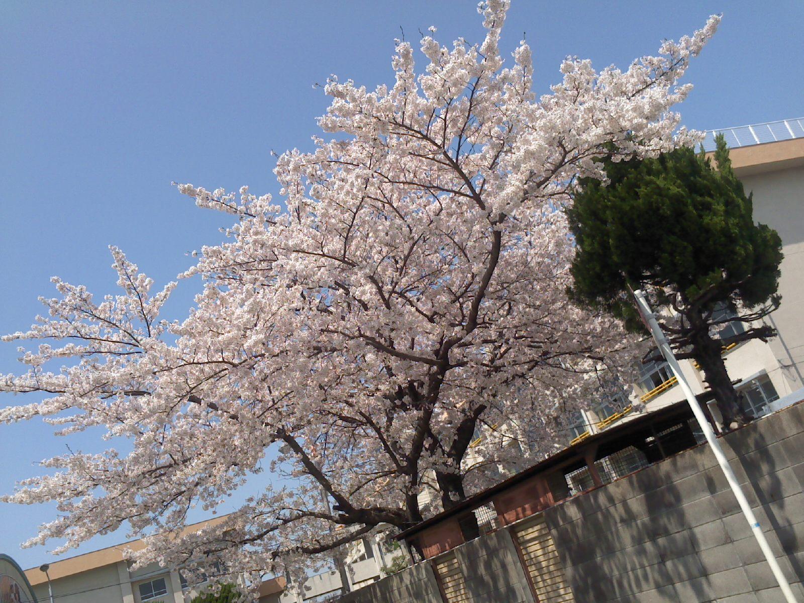 画像20120412 011
