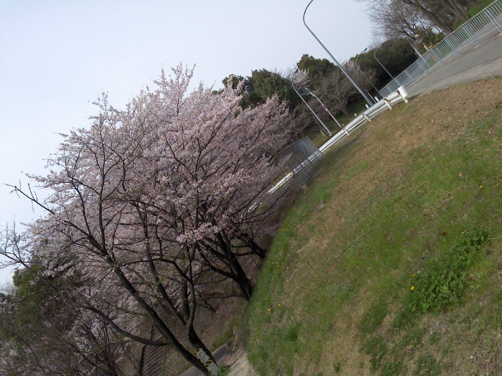 画像20120414 002