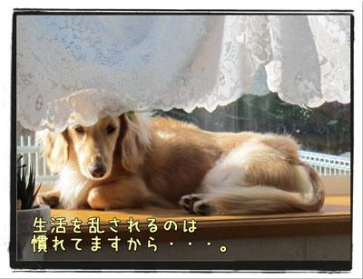 2010102704.jpg