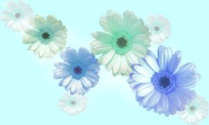 写真花壁紙-B-ライト.jpg