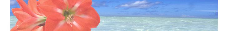 赤いアマリリスと海.jpg