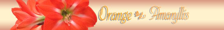 オレンジアマリリスタイトル.jpg