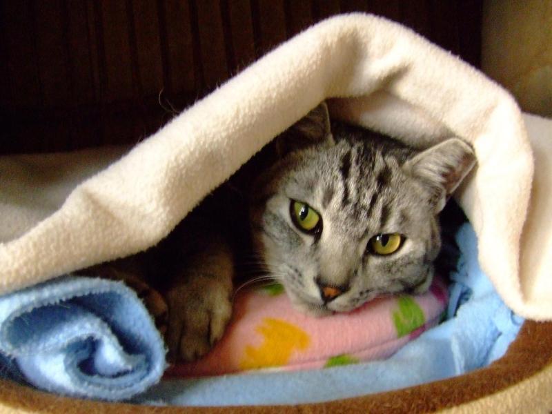 愛する猫ちんと船釣りと観光地めぐり-natu