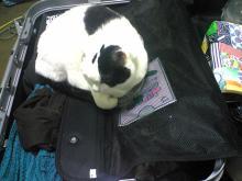 愛する猫ちんと船釣りと観光地めぐり