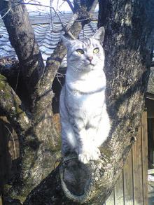 愛する猫ちんと船釣りと観光地めぐり-なつ