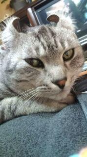 愛する猫ちんと船釣りと観光地めぐり-20090223020431.jpg