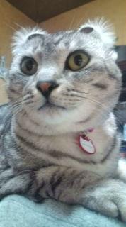 愛する猫ちんと船釣りと観光地めぐり-20090304021807.jpg