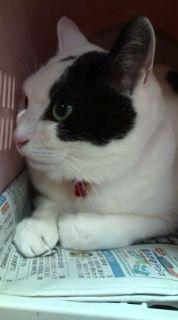 愛する猫ちんと船釣りと観光地めぐり-20090319175753.jpg