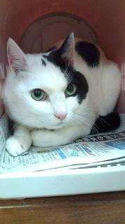 愛する猫ちんと船釣りと観光地めぐり-20090319175656.jpg