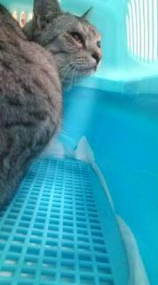 愛する猫ちんと船釣りと観光地めぐり-20090418195948.jpg