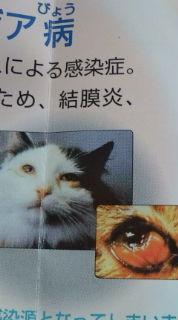 愛する猫ちんと船釣りと観光地めぐり-20090419185343.jpg