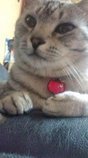 愛する猫ちんと船釣りと観光地めぐり-20090420023115.jpg