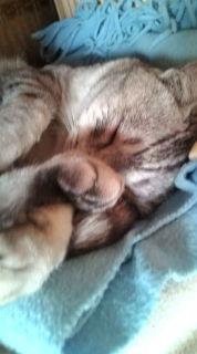 愛する猫ちんと船釣りと観光地めぐり-20090419152225.jpg