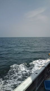 愛する猫ちんと船釣りと観光地めぐり-20090501121522.jpg