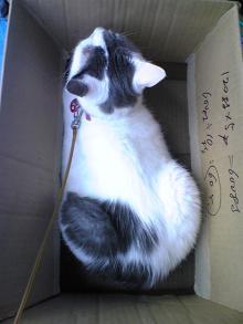 愛する猫ちんと船釣りと観光地めぐり-あい