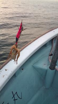 愛する猫ちんと船釣りと観光地めぐり-たこ