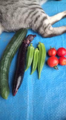 愛する猫ちんと船釣りと観光地めぐり-野菜