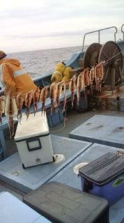 愛する猫ちんと船釣りと観光地めぐり-20090729075900.jpg