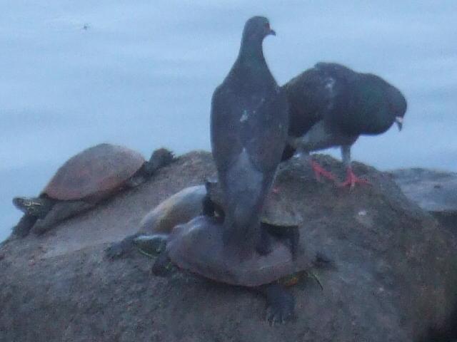 愛する猫ちんと船釣りと観光地めぐり-亀 亀 鳩