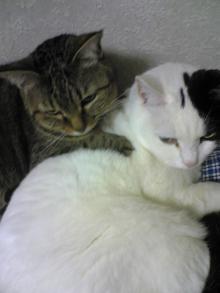 愛する猫ちんと船釣りと観光地めぐり-アキとノン