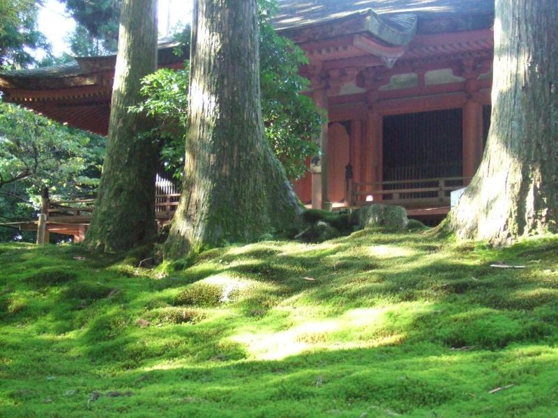 愛する猫ちんと船釣りと観光地めぐり-比叡山延暦寺