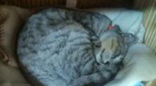 愛する猫ちんと船釣りと観光地めぐり-20091008010812.jpg