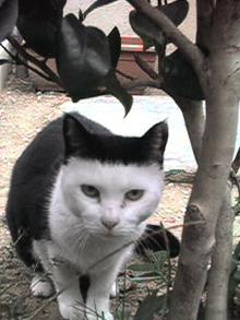 愛する猫ちんと船釣りと観光地めぐり-ねこ