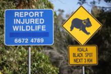 愛する猫ちんと船釣りと観光地めぐり-コアラ道路標識