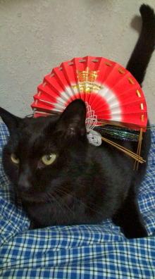 愛する猫ちんと船釣りと観光地めぐり-ハナ