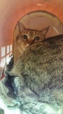 愛する猫ちんと船釣りと観光地めぐり-20100227195941.jpg