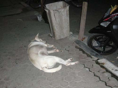 愛する猫ちんと船釣りと観光地めぐり-犬