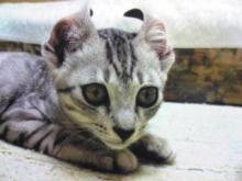 愛する猫ちんと船釣りと観光地めぐり-natsu