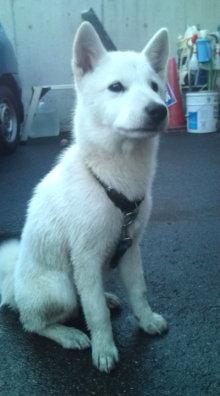 愛する猫ちんと船釣りと観光地めぐり-北海道犬