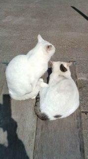 愛する猫ちんと船釣りと観光地めぐり-20101110120235.jpg