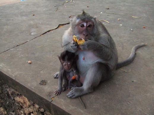 愛する猫ちんと船釣りと観光地めぐり-ウルワツ寺院の猿