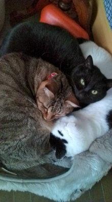 愛する猫ちんと船釣りと観光地めぐり-猫団子