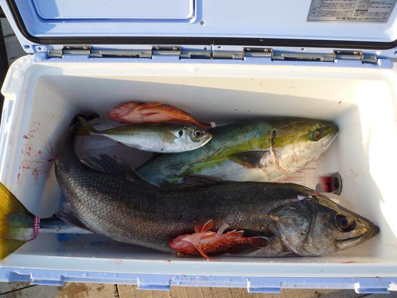 愛する猫ちんと船釣りと観光地めぐり-釣果