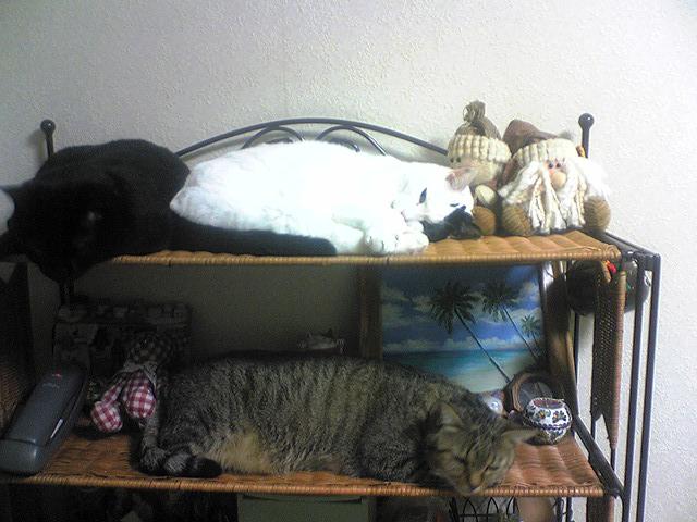 愛する猫ちんと船釣りと観光地めぐり-3cats