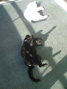 愛する猫ちんと船釣りと観光地めぐり-2cats
