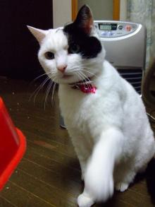 愛する猫ちんと船釣りと観光地めぐり-ai